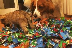 Snuffle Mat per i cuccioli 2